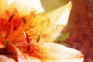 Indoor Air Pollutants and Their Sources - Pollen